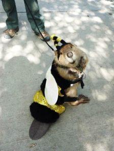 Bee...ver